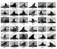 Thumb_catalogue_paracas_bay_dolphins