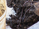 Thumb_vermin_trng.___soil_sampling__8_